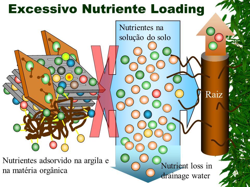 Excessivo Nutriente Loading Raiz Nutrientes na solução do solo Nutrient loss in drainage water Nutrientes adsorvido na argila e na matéria orgânica