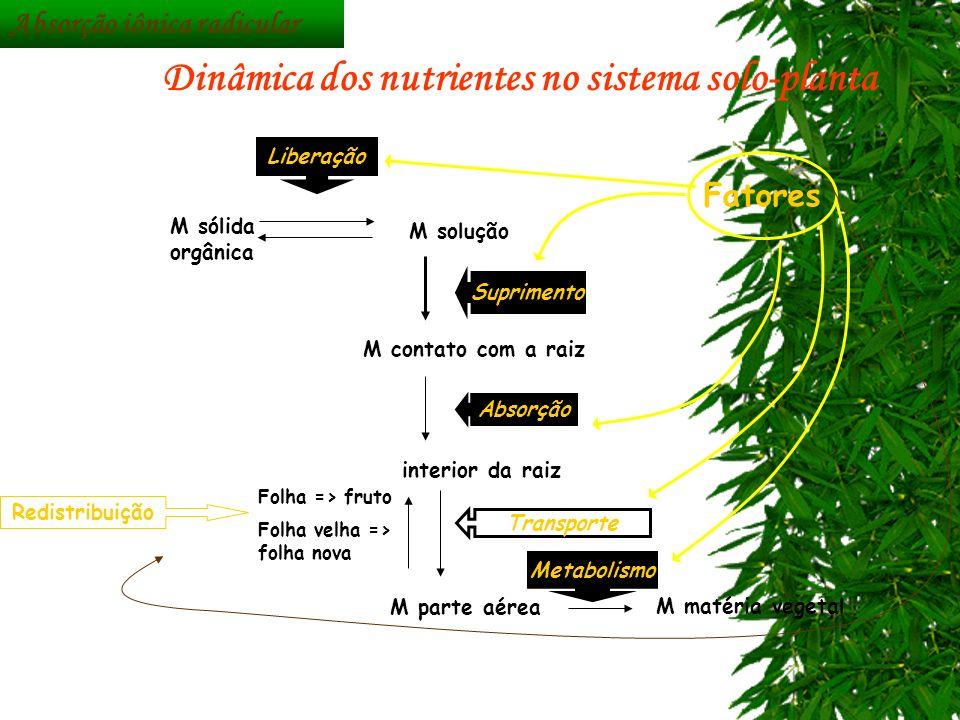 M matéria vegetal M sólida orgânica M solução M contato com a raiz M interior da raiz M parte aérea Fatores Liberação Metabolismo Transporte Absorção