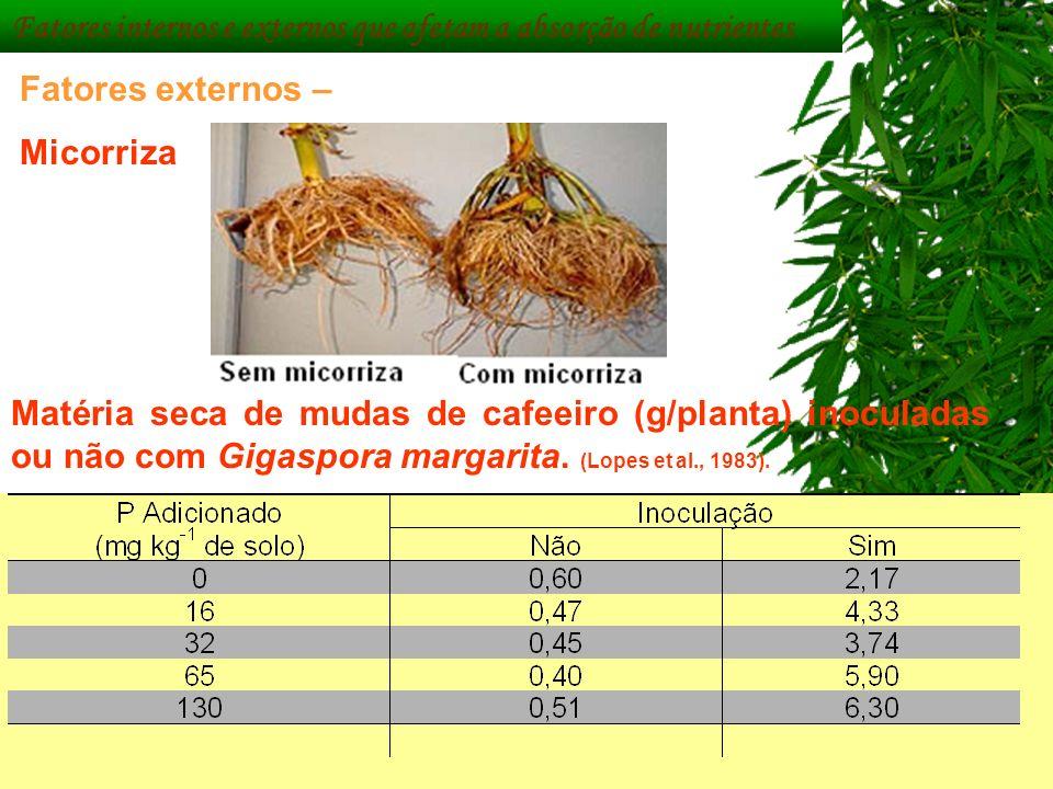Matéria seca de mudas de cafeeiro (g/planta) inoculadas ou não com Gigaspora margarita. (Lopes et al., 1983). Fatores internos e externos que afetam a