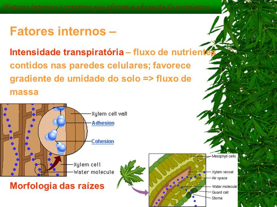 Fatores internos – Intensidade transpiratória – fluxo de nutrientes contidos nas paredes celulares; favorece gradiente de umidade do solo => fluxo de