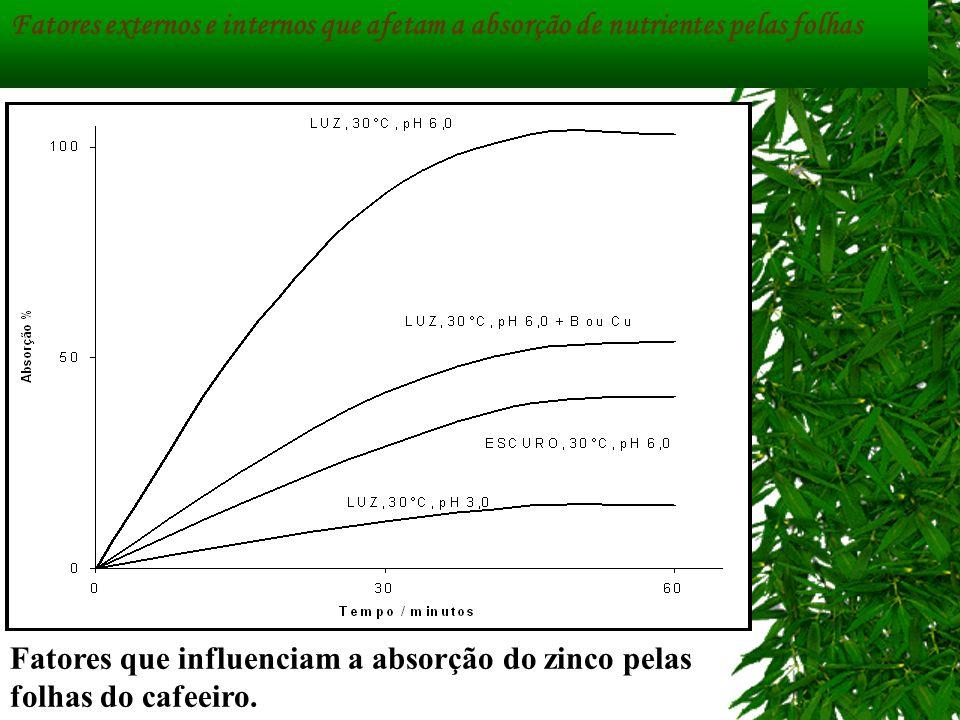 Fatores externos e internos que afetam a absorção de nutrientes pelas folhas Fatores que influenciam a absorção do zinco pelas folhas do cafeeiro.