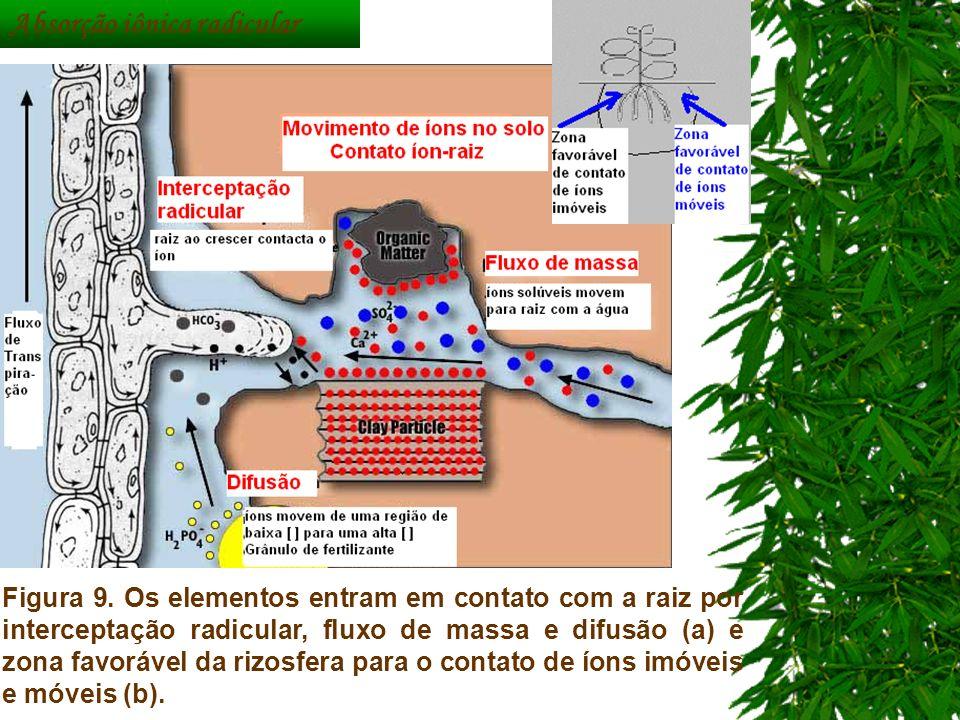 Figura 9. Os elementos entram em contato com a raiz por interceptação radicular, fluxo de massa e difusão (a) e zona favorável da rizosfera para o con