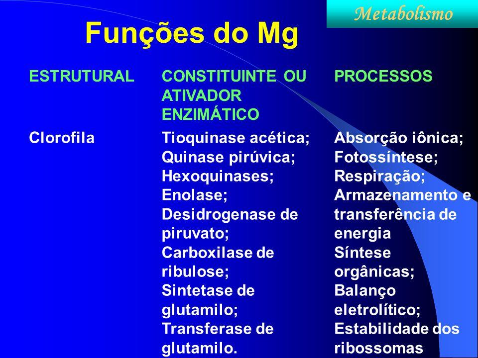 Funções do Mg ESTRUTURALCONSTITUINTE OU ATIVADOR ENZIMÁTICO PROCESSOS ClorofilaTioquinase acética; Quinase pirúvica; Hexoquinases; Enolase; Desidrogen