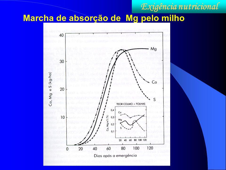 Marcha de absorção de Mg pelo milho Exigência nutricional
