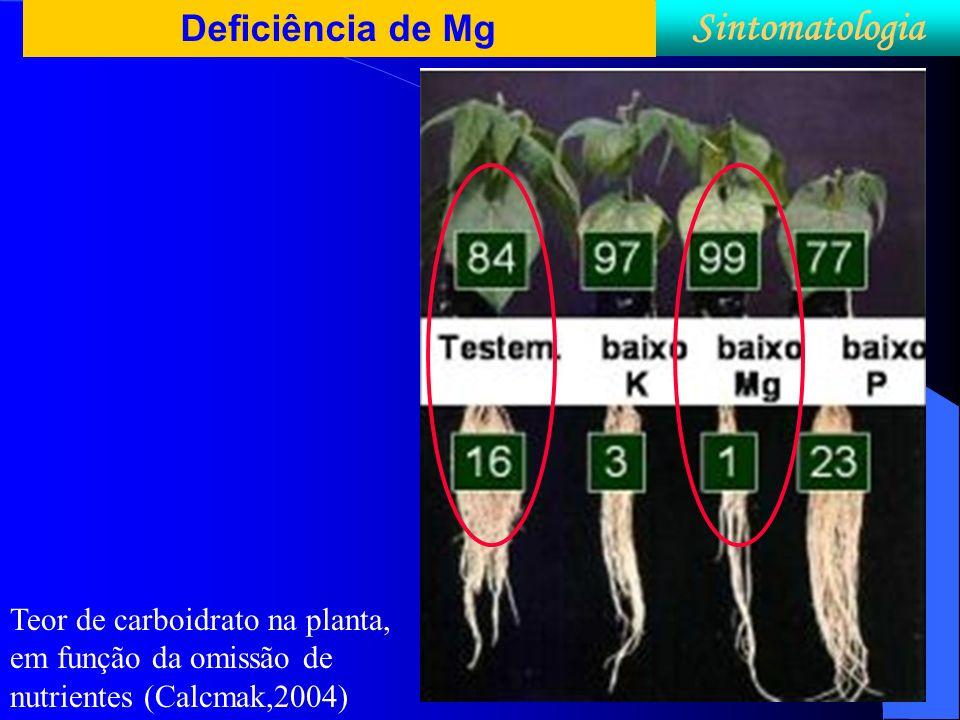 Deficiência de Mg Sintomatologia Teor de carboidrato na planta, em função da omissão de nutrientes (Calcmak,2004)
