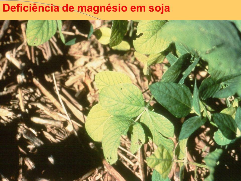 Deficiência de magnésio em soja