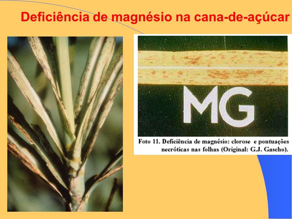 Deficiência de magnésio na cana-de-açúcar