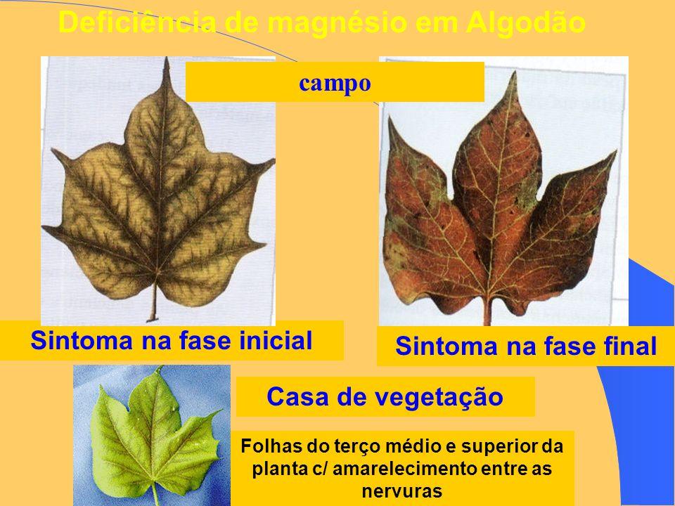 Deficiência de magnésio em Algodão Sintoma na fase inicial Sintoma na fase final Folhas do terço médio e superior da planta c/ amarelecimento entre as