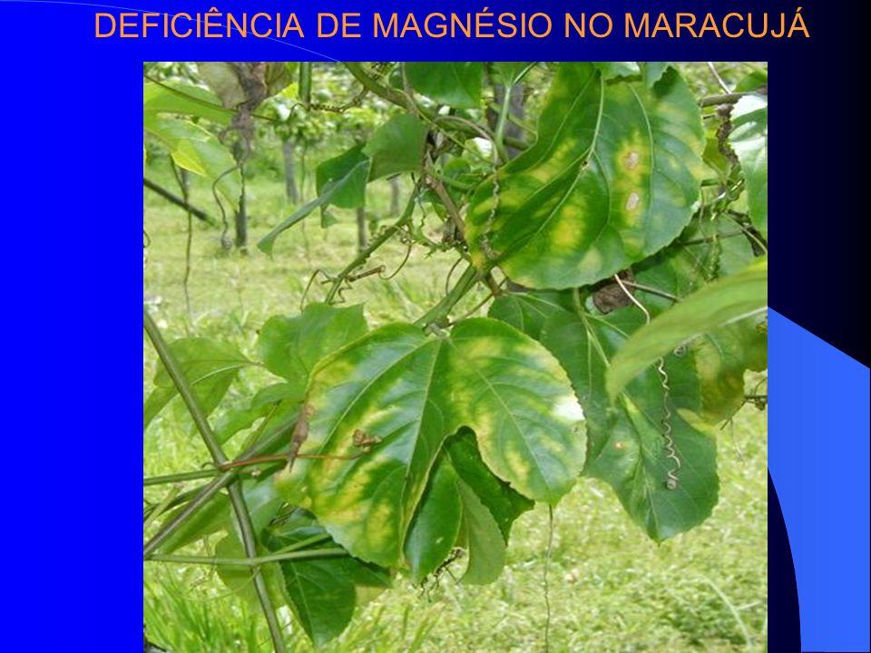 DEFICIÊNCIA DE MAGNÉSIO NO MARACUJÁ