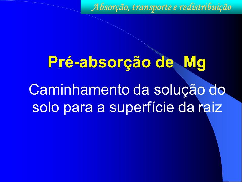 Pré-absorção de Mg Caminhamento da solução do solo para a superfície da raiz Absorção, transporte e redistribuição