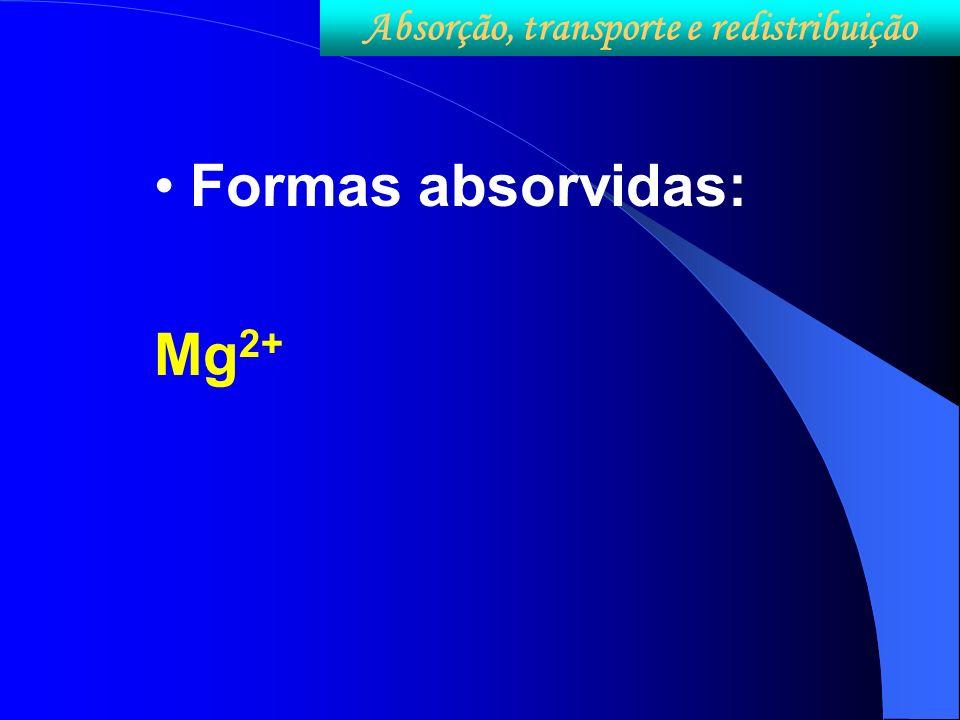 Formas absorvidas: Mg 2+ Absorção, transporte e redistribuição