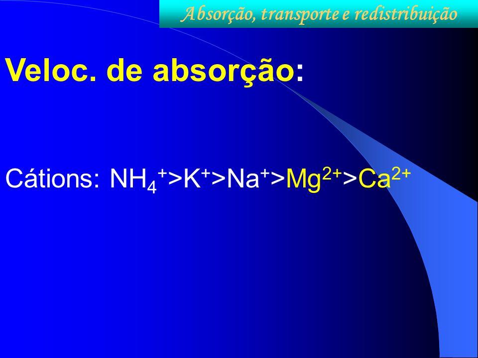 Veloc. de absorção: Cátions: NH 4 + >K + >Na + >Mg 2+ >Ca 2+ Absorção, transporte e redistribuição