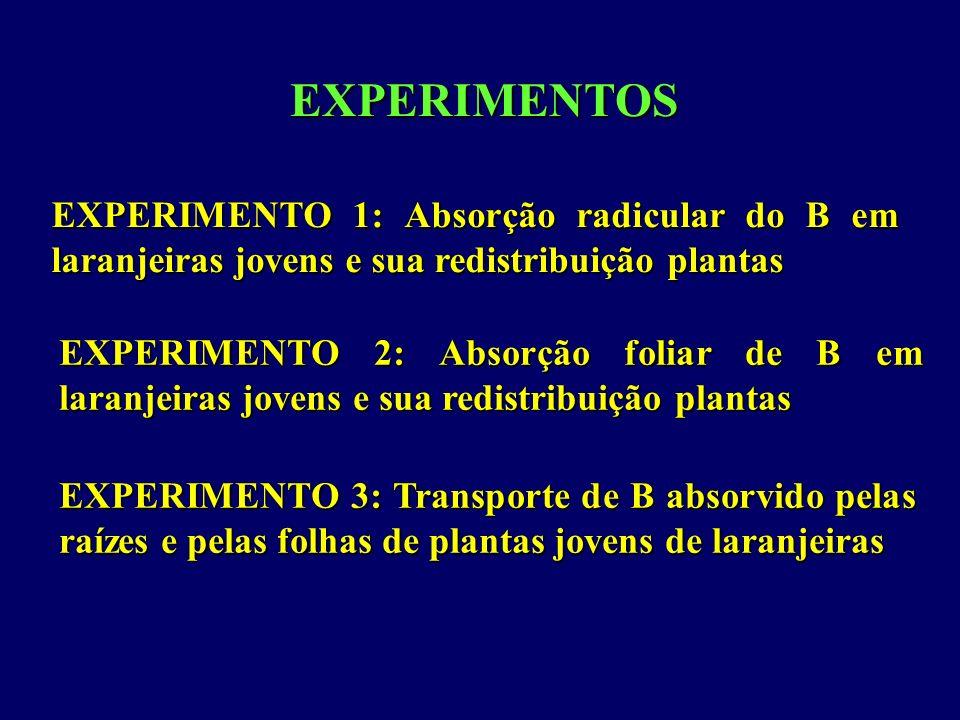 EXPERIMENTOS EXPERIMENTO 1: Absorção radicular do B em laranjeiras jovens e sua redistribuição plantas EXPERIMENTO 2: Absorção foliar de B em laranjei