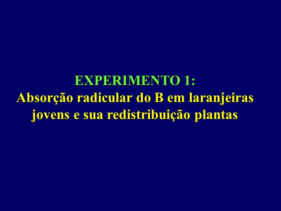 EXPERIMENTO 1: Absorção radicular do B em laranjeiras jovens e sua redistribuição plantas