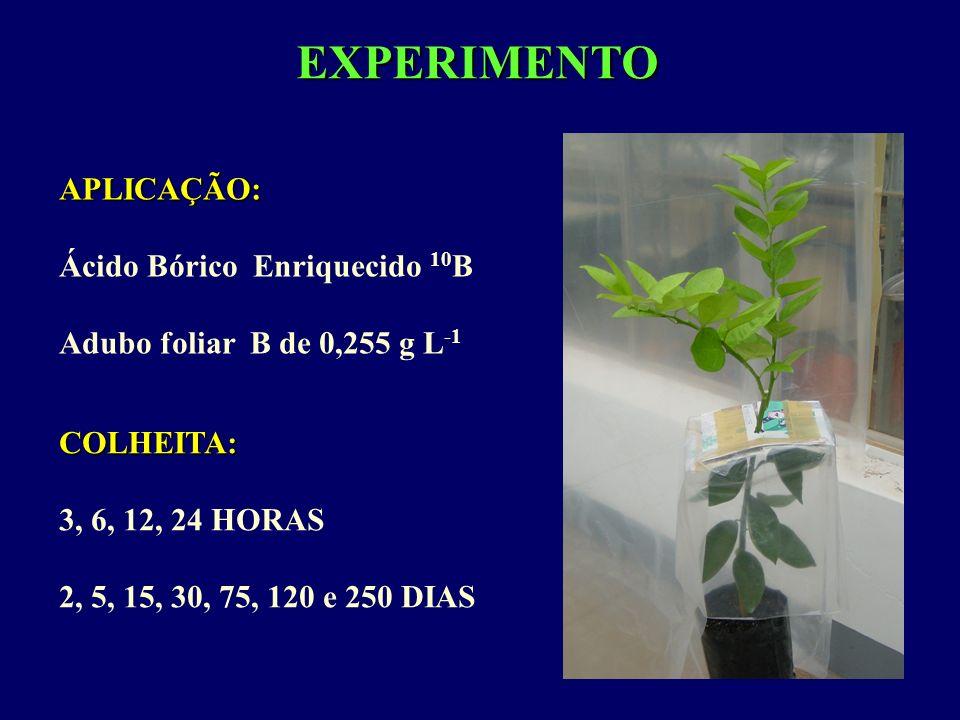 EXPERIMENTO APLICAÇÃO: Ácido Bórico Enriquecido 10 B Adubo foliar B de 0,255 g L -1 COLHEITA: 3, 6, 12, 24 HORAS 2, 5, 15, 30, 75, 120 e 250 DIAS