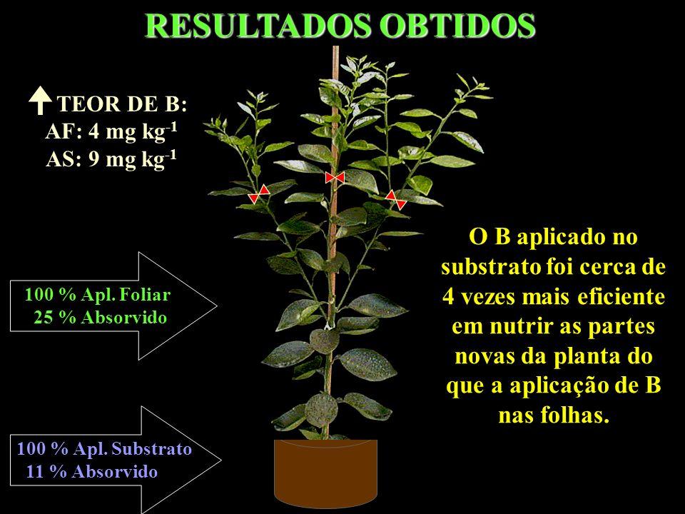 RESULTADOS OBTIDOS O B aplicado no substrato foi cerca de 4 vezes mais eficiente em nutrir as partes novas da planta do que a aplicação de B nas folha
