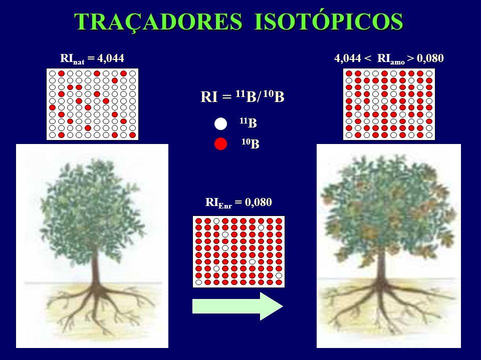 EXPERIMENTO 3: Transporte de B absorvido pelas raízes e pelas folhas de plantas jovens de laranjeiras