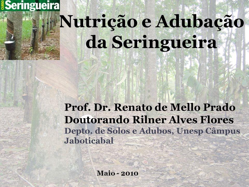Nutrição e Adubação da Seringueira Prof. Dr. Renato de Mello Prado Doutorando Rilner Alves Flores Depto. de Solos e Adubos, Unesp Câmpus Jaboticabal M