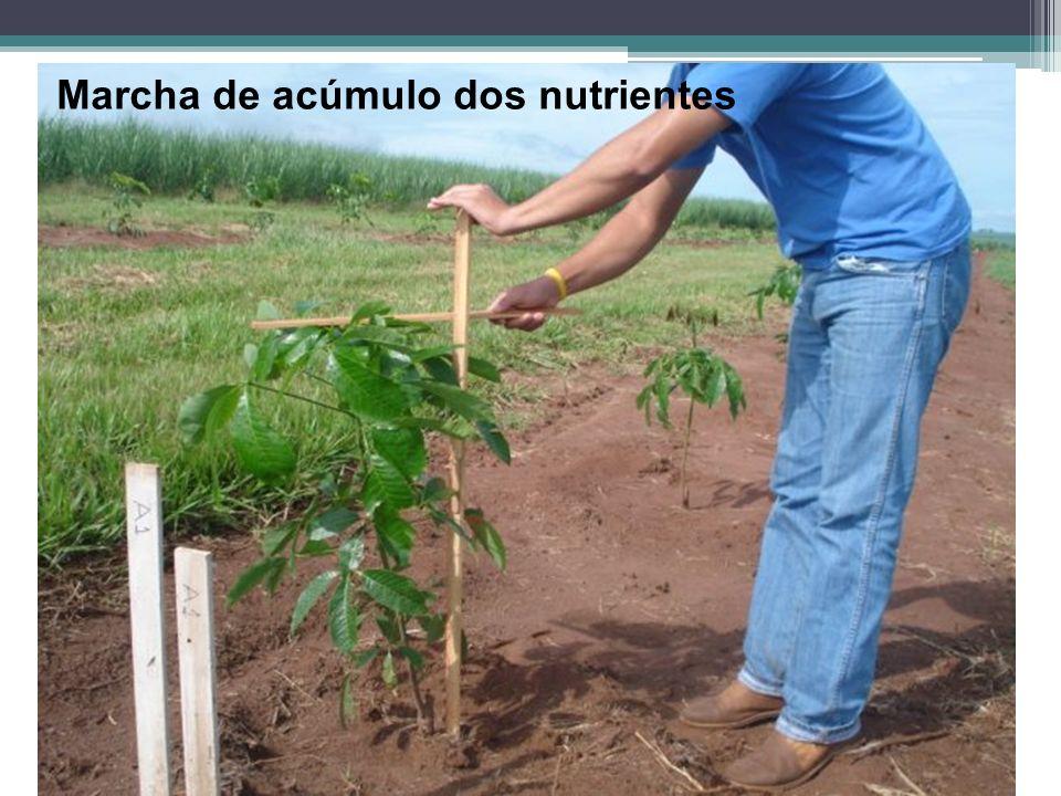 Marcha de acúmulo dos nutrientes