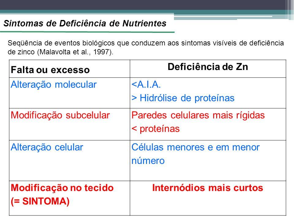 Sintomas de Deficiência de Nutrientes Falta ou excesso Deficiência de Zn Alteração molecular <A.I.A. > Hidrólise de proteínas Modificação subcelular P