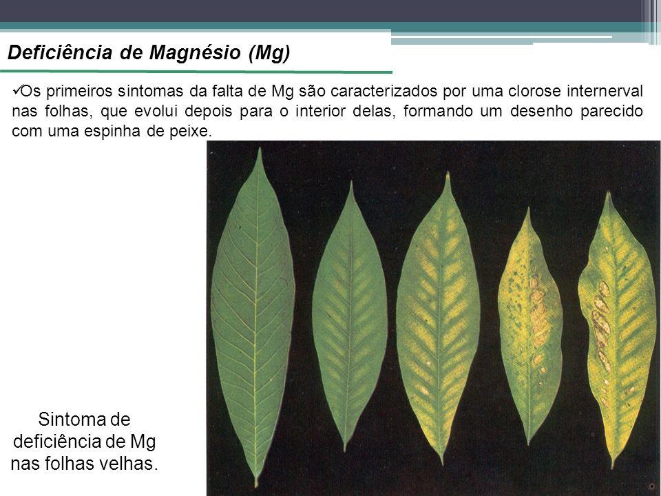 Deficiência de Magnésio (Mg) Os primeiros sintomas da falta de Mg são caracterizados por uma clorose internerval nas folhas, que evolui depois para o interior delas, formando um desenho parecido com uma espinha de peixe.