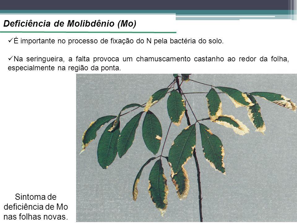 Deficiência de Molibdênio (Mo) É importante no processo de fixação do N pela bactéria do solo. Na seringueira, a falta provoca um chamuscamento castan