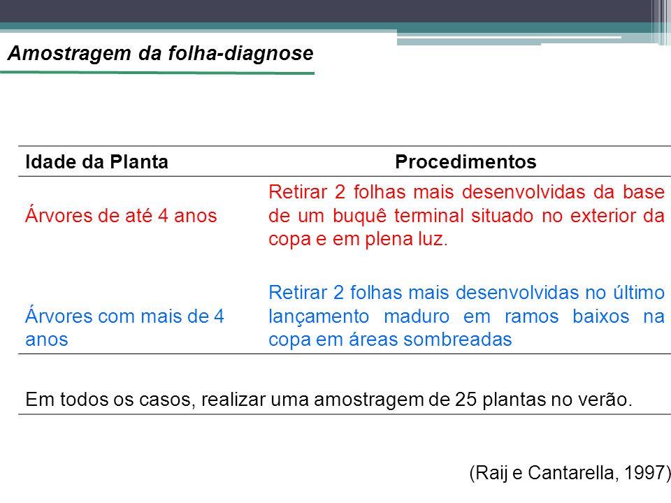 Amostragem da folha-diagnose Idade da PlantaProcedimentos Árvores de até 4 anos Retirar 2 folhas mais desenvolvidas da base de um buquê terminal situado no exterior da copa e em plena luz.