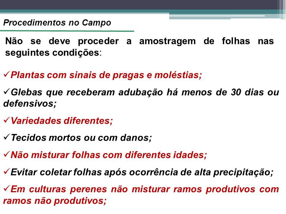Procedimentos no Campo Não se deve proceder a amostragem de folhas nas seguintes condições: Plantas com sinais de pragas e moléstias; Glebas que receb