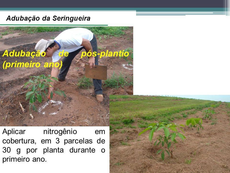 Adubação de pós-plantio (primeiro ano) Aplicar nitrogênio em cobertura, em 3 parcelas de 30 g por planta durante o primeiro ano. Adubação da Seringuei