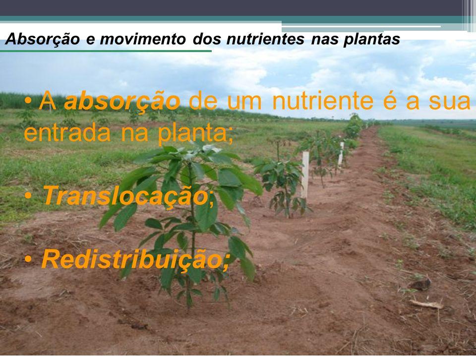 Absorção e movimento dos nutrientes nas plantas A absorção de um nutriente é a sua entrada na planta; Translocação; Redistribuição;