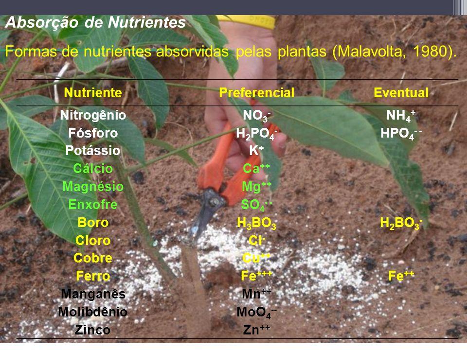 Absorção de Nutrientes NutrientePreferencialEventual NitrogênioNO 3 - NH 4 + FósforoH 2 PO 4 - HPO 4 - - PotássioK+K+ CálcioCa ++ MagnésioMg ++ EnxofreSO 4 - - BoroH 3 BO 3 H 2 BO 3 - CloroCl - CobreCu ++ FerroFe +++ Fe ++ ManganêsMn ++ MolibdênioMoO 4 -- ZincoZn ++ Formas de nutrientes absorvidas pelas plantas (Malavolta, 1980).