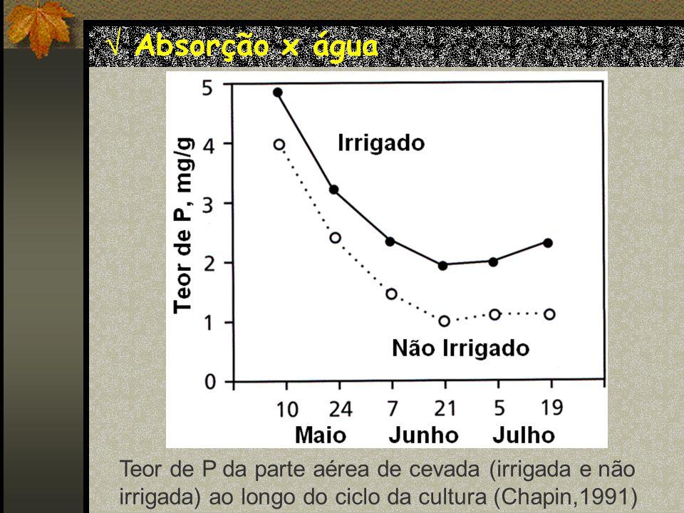 Absorção x água Teor de P da parte aérea de cevada (irrigada e não irrigada) ao longo do ciclo da cultura (Chapin,1991)