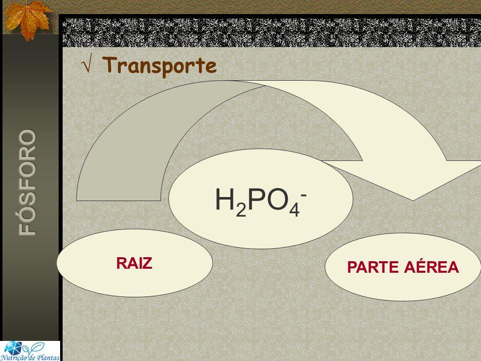 Transporte RAIZ PARTE AÉREA H 2 PO 4 -