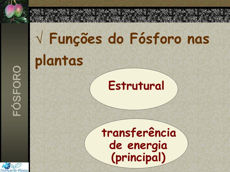 Funções do Fósforo nas plantas Estrutural transferência de energia (principal)