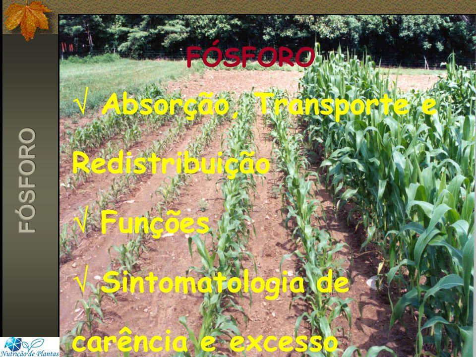 FÓSFORO Absorção, Transporte e Redistribuição Funções Sintomatologia de carência e excesso
