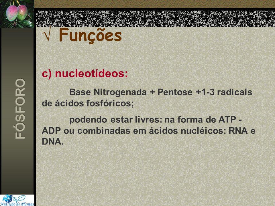 Funções c) nucleotídeos: Base Nitrogenada + Pentose +1-3 radicais de ácidos fosfóricos; podendo estar livres: na forma de ATP - ADP ou combinadas em á
