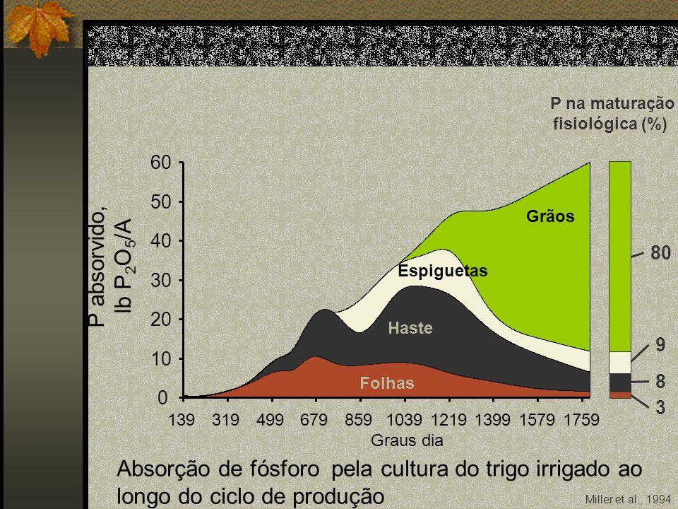 Miller et al., 1994 P na maturação fisiológica (%) 80 9 8 3 0 10 20 30 40 50 60 13931949967985910391219139915791759 Graus dia Folhas Haste Espiguetas