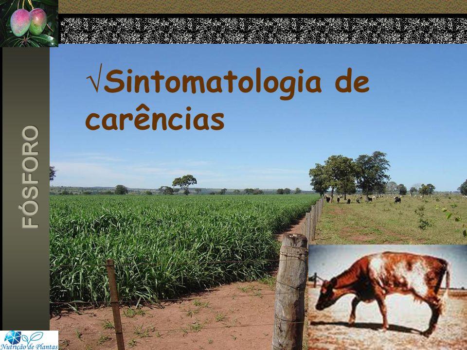 Sintomatologia de carências