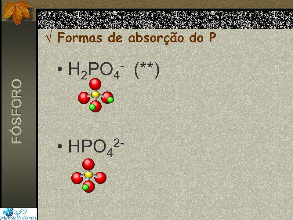 Formas de absorção do P H 2 PO 4 - (**) HPO 4 2-