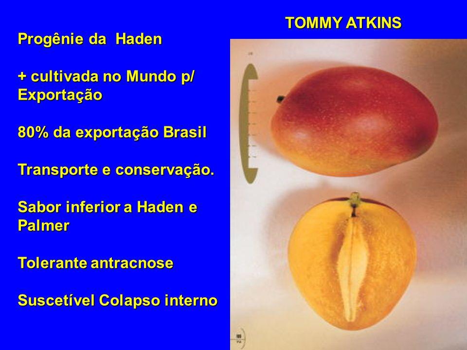 Progênie da Haden + cultivada no Mundo p/ Exportação 80% da exportação Brasil Transporte e conservação. Sabor inferior a Haden e Palmer Tolerante antr