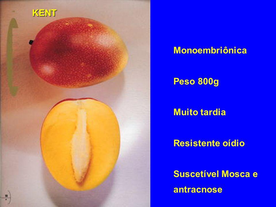 Monoembriônica Peso 800g Muito tardia Resistente oídio Suscetível Mosca e antracnose KENT