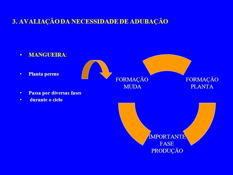 3. AVALIAÇÃO DA NECESSIDADE DE ADUBAÇÃO MANGUEIRA: Planta perene Passa por diversas fases durante o ciclo FORMAÇÃO PLANTA IMPORTANTE FASE PRODUÇÃO FOR