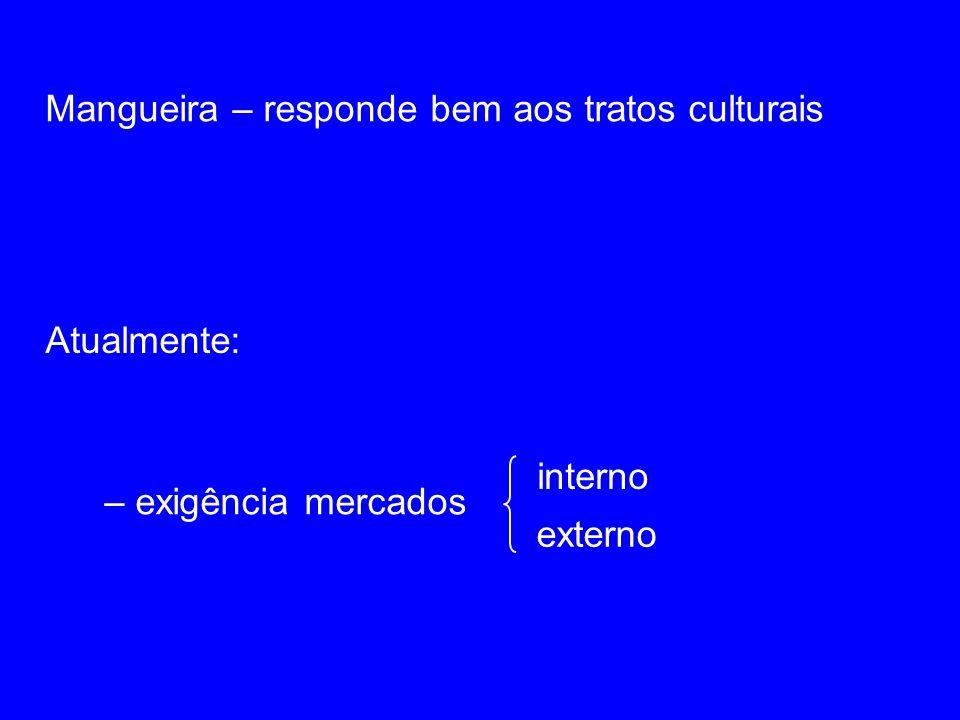 Mangueira – responde bem aos tratos culturais Atualmente: – exigência mercados interno externo