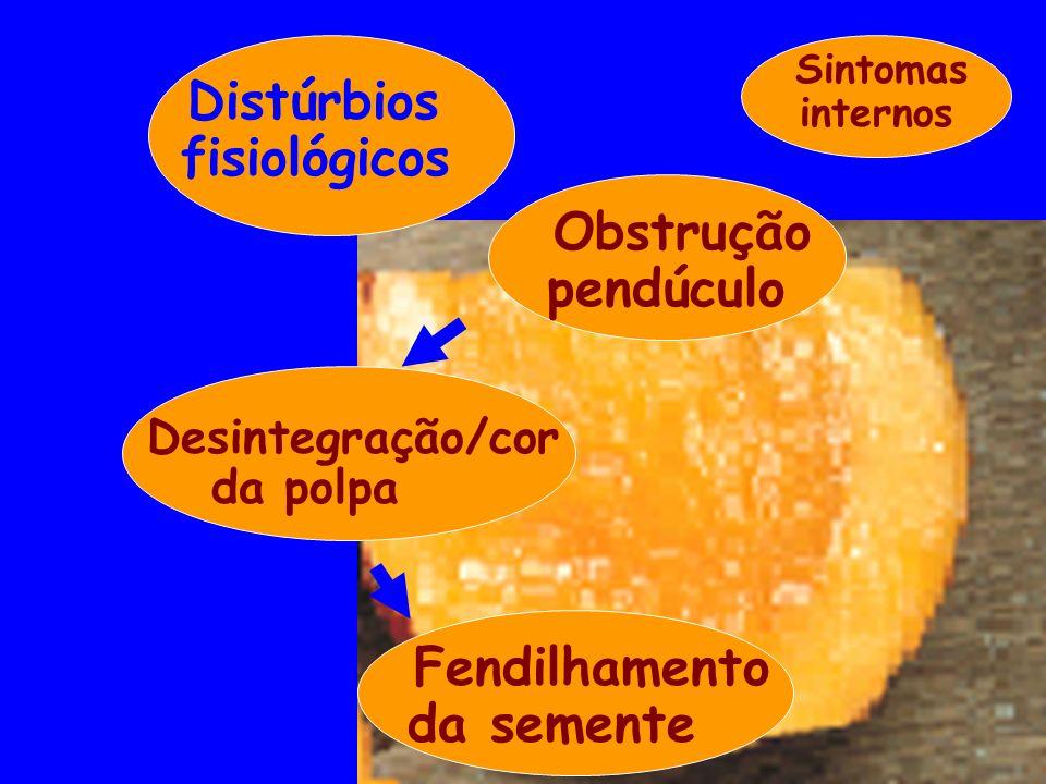 Obstrução pendúculo Desintegração/cor da polpa Fendilhamento da semente Sintomas internos