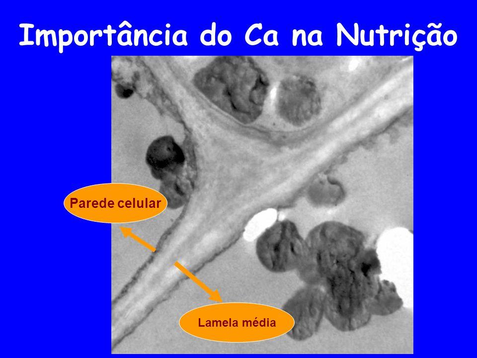 Importância do Ca na Nutrição Lamela média Parede celular