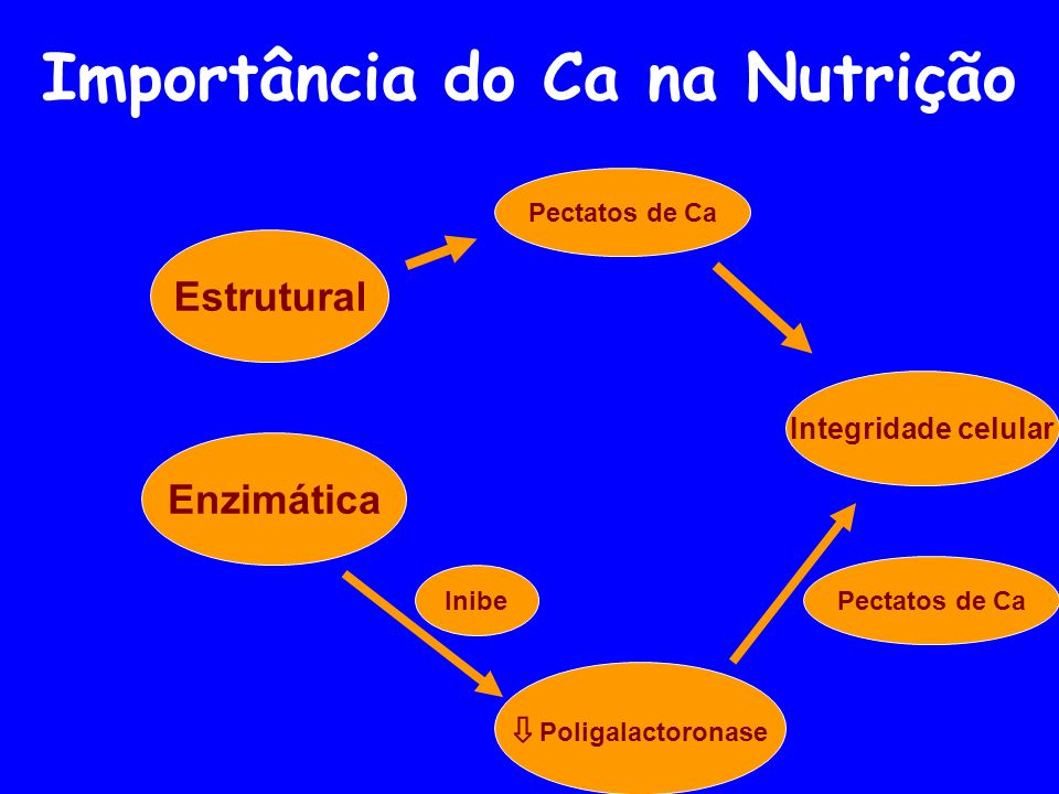 Importância do Ca na Nutrição Enzimática Integridade celular Poligalactoronase Pectatos de Ca Estrutural Inibe Pectatos de Ca