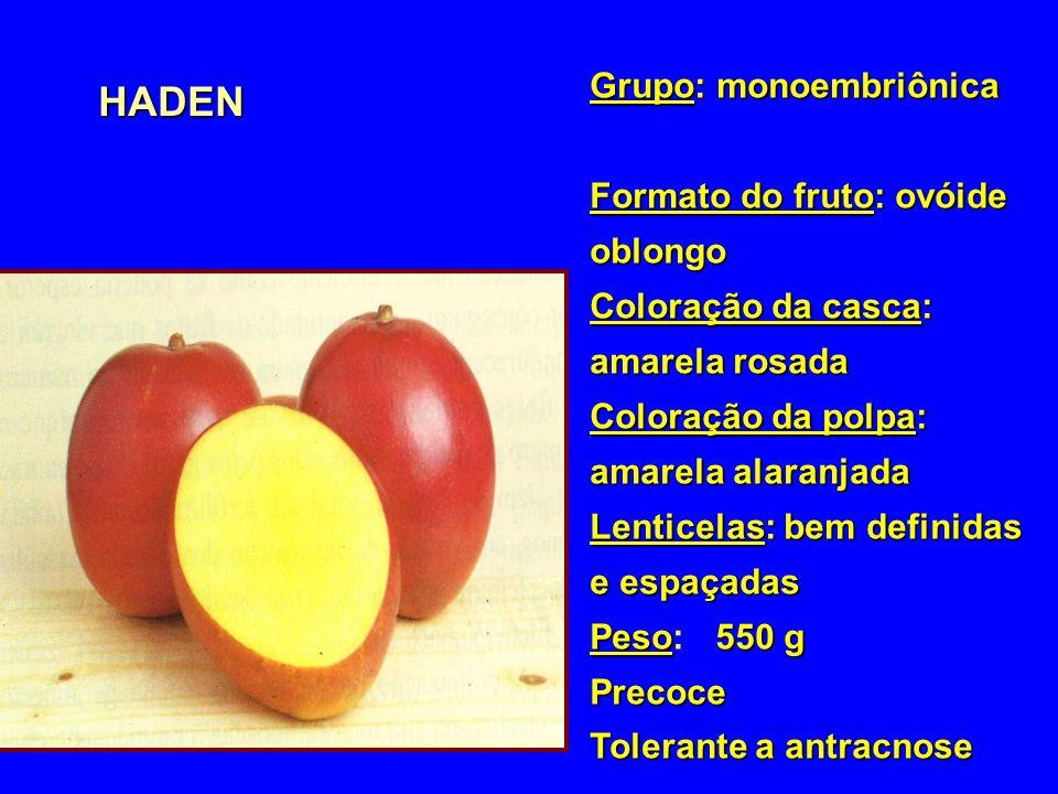 HADEN Grupo: monoembriônica Formato do fruto: ovóide oblongo Coloração da casca: amarela rosada Coloração da polpa: amarela alaranjada Lenticelas: bem