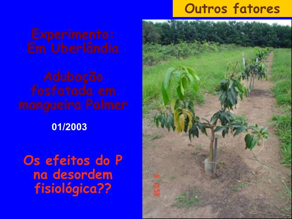 Experimento: Em Uberlândia Adubação fosfatada em mangueira Palmer Os efeitos do P na desordem fisiológica?? Outros fatores 01/2003