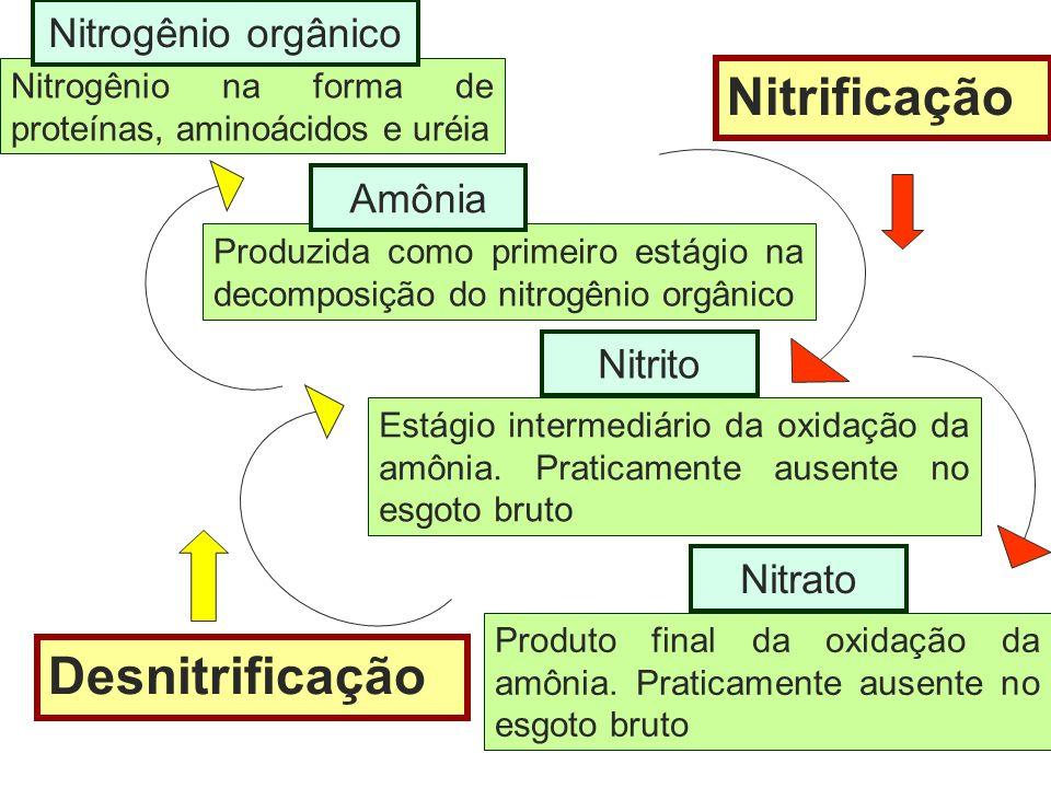 Nitrogênio na forma de proteínas, aminoácidos e uréia Nitrogênio orgânico Produzida como primeiro estágio na decomposição do nitrogênio orgânico Amôni