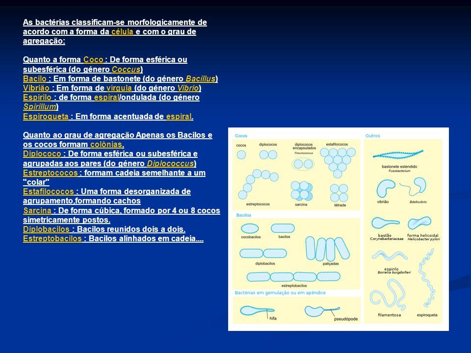 As bactérias classificam-se morfologicamente de acordo com a forma da célula e com o grau de agregação:célula Quanto a forma Coco : De forma esférica